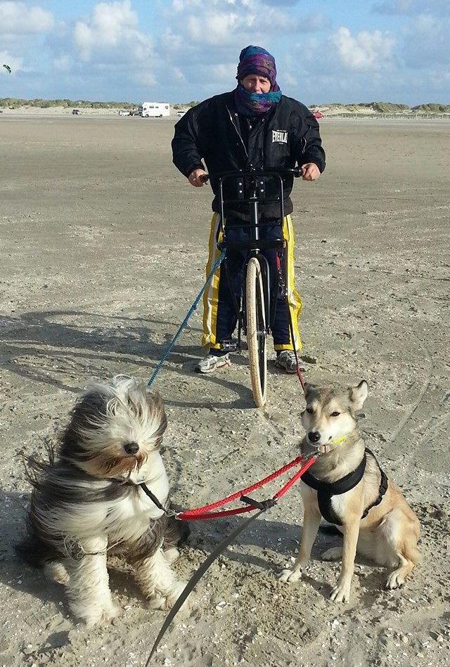 Dogscooter selber bauen Schritt für Schritt Anleitung