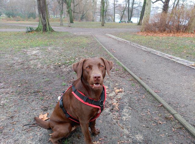 Dogscooting als Sport wird unterschätzt, es erfreut sich immer größerer Beliebtheit