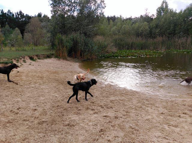 Dogscooter Anfänger Anleitung