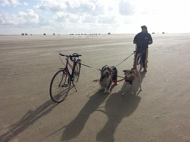 Dogscooter gebraucht kaufen