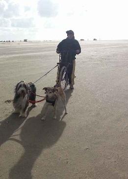 Dogscooter und Kickbike Test 2016